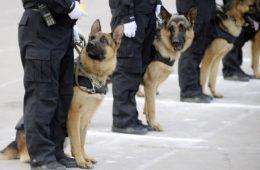 Curso de vigilante con perro-www.alpeformacion.es