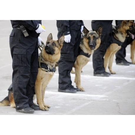 FEVS vigilancia con perros